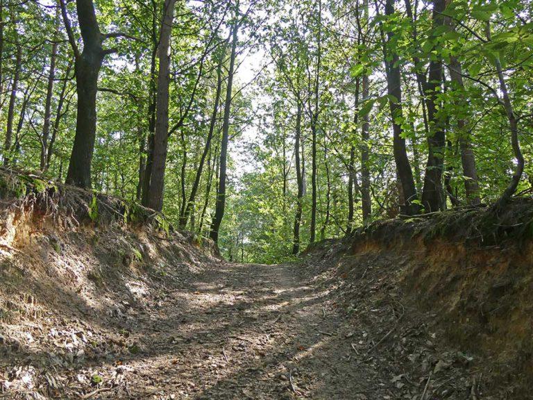 Holle weg doorheen het Mechelse bos